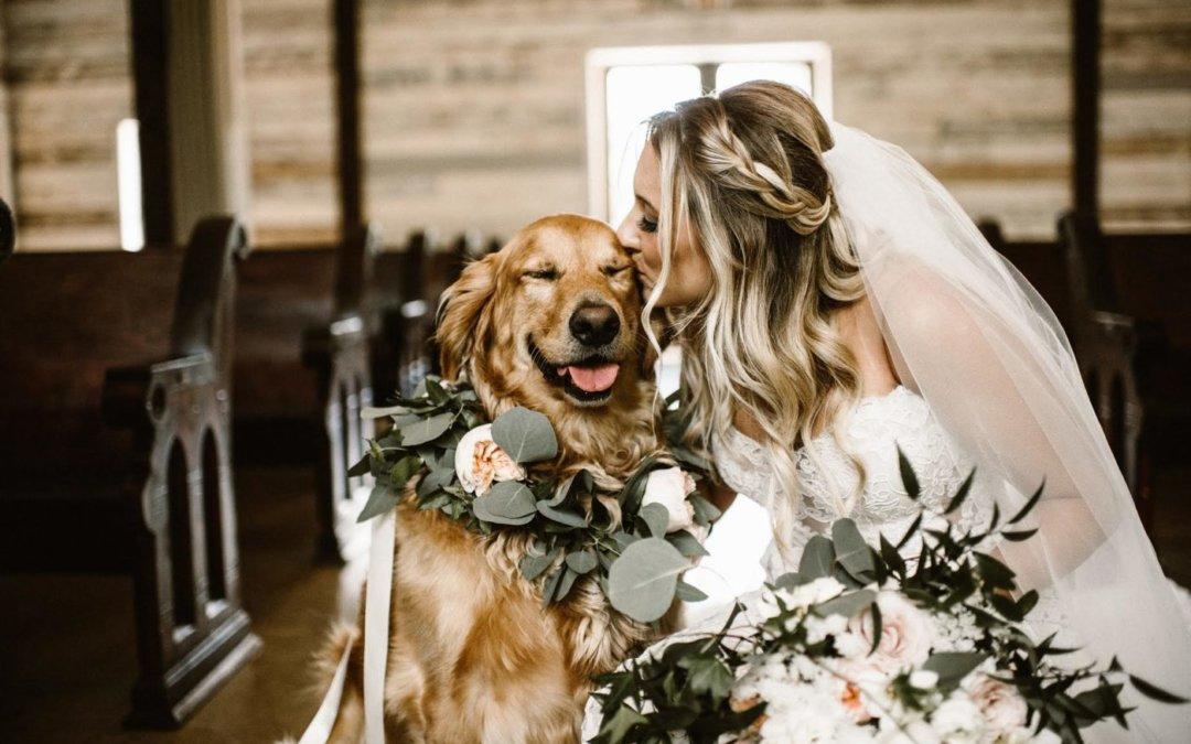 Állatok az esküvőn: Négylábúak a meghívottak listáján