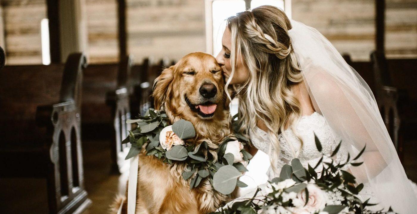 állatok az esküvőn